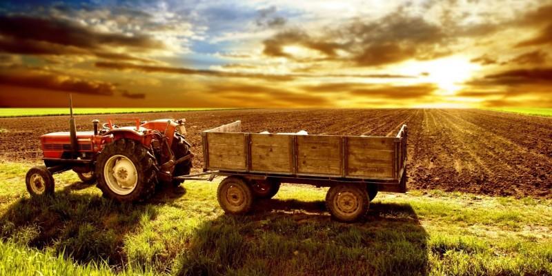 A Bunge e seus concorrentes sofreram com o fato de os produtores brasileiros estocarem a soja da safra deste ano, em vez de comercializá-la em meio às cotações baixas